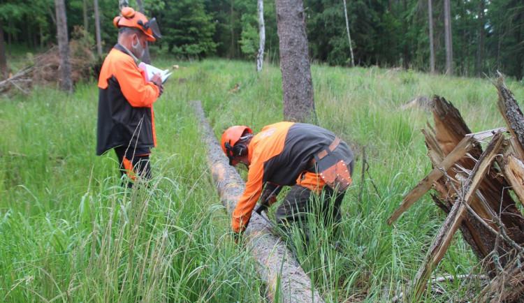 Budoucí lesnící se učí kácet stromy podle videí, mladí kuchaři plní rodinám mrazáky navařeným jídlem