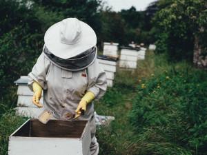 Karlovarský kraj letos rozdělí včelařům 1,3 milionu korun