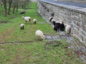 Živé sekačky se vrací do třešňového sadu v Karlových Varech