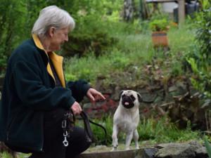Nejstarší psí hotel v Česku, má plno už třicet let
