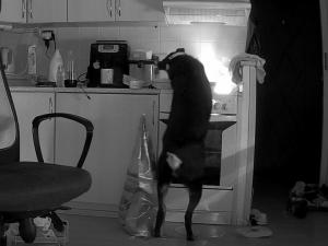 Pes způsobil požár na sporáku kuchyně bytu v panelovém domu, vše zachytila bezpečnostní kamera